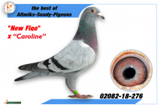 2082-18-276 - New Figo x Caroline (mother Blue River)