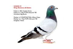 210425-19 M - full brother 1 Nat FCPR Ace pigeon Allround YB