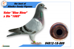 4812-18-869 - Father Blue River x Die 1085