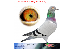 BG 18 55532 F - 1 Ace pigeon AS Golden Race x 1 Final Fauna Orheiului