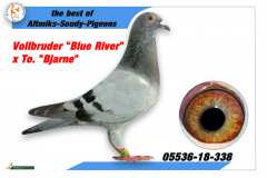 DV 5536 18 338 F - Brother Blue River x Dcht Bjarne
