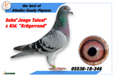 DV 5536 18 346 - Son Jonge Talent x Gdaughter Kruggerand