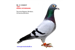 NL 14 1354650 F - top racing hen; top prizes Bergerac, Bordeaux, Carcasonne, Barcelona Nat