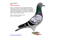 NL 18 1355227 M - Grandson SUPER KWEKER Beckers-Willems; mother is sister INGE