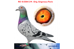 RO 18 550412 M - Raced until 315km; 1/2 brother 1 Nat UCPR Expo AS