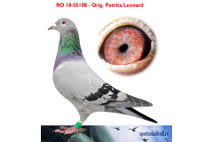 RO 18 55108 F - Daughter 1 Ace pigeon Transilvania OLR