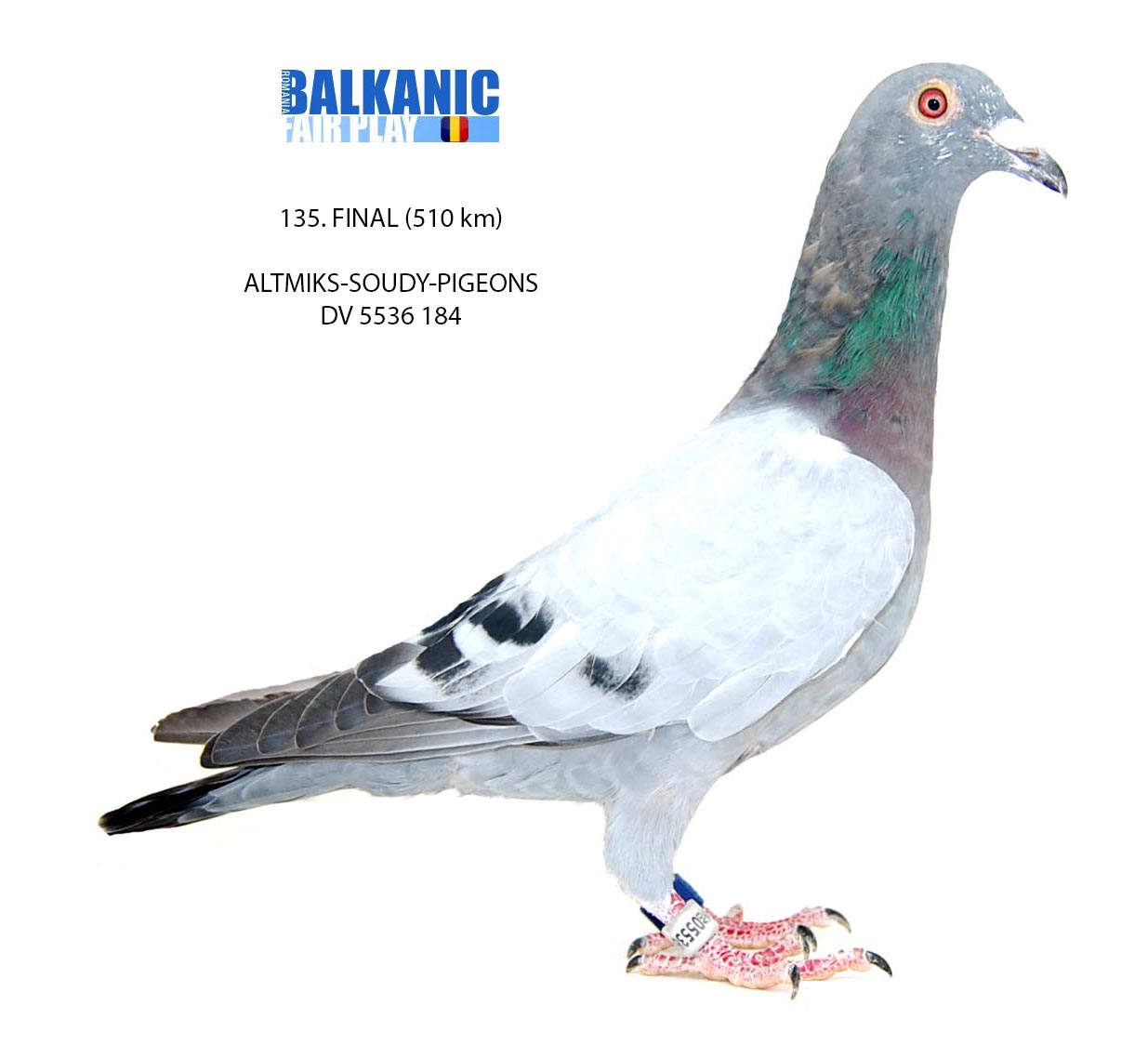 135 FINAL ALTMIKS-SOUDY-PIGEONSTEAM AGermanyDV 5536 184