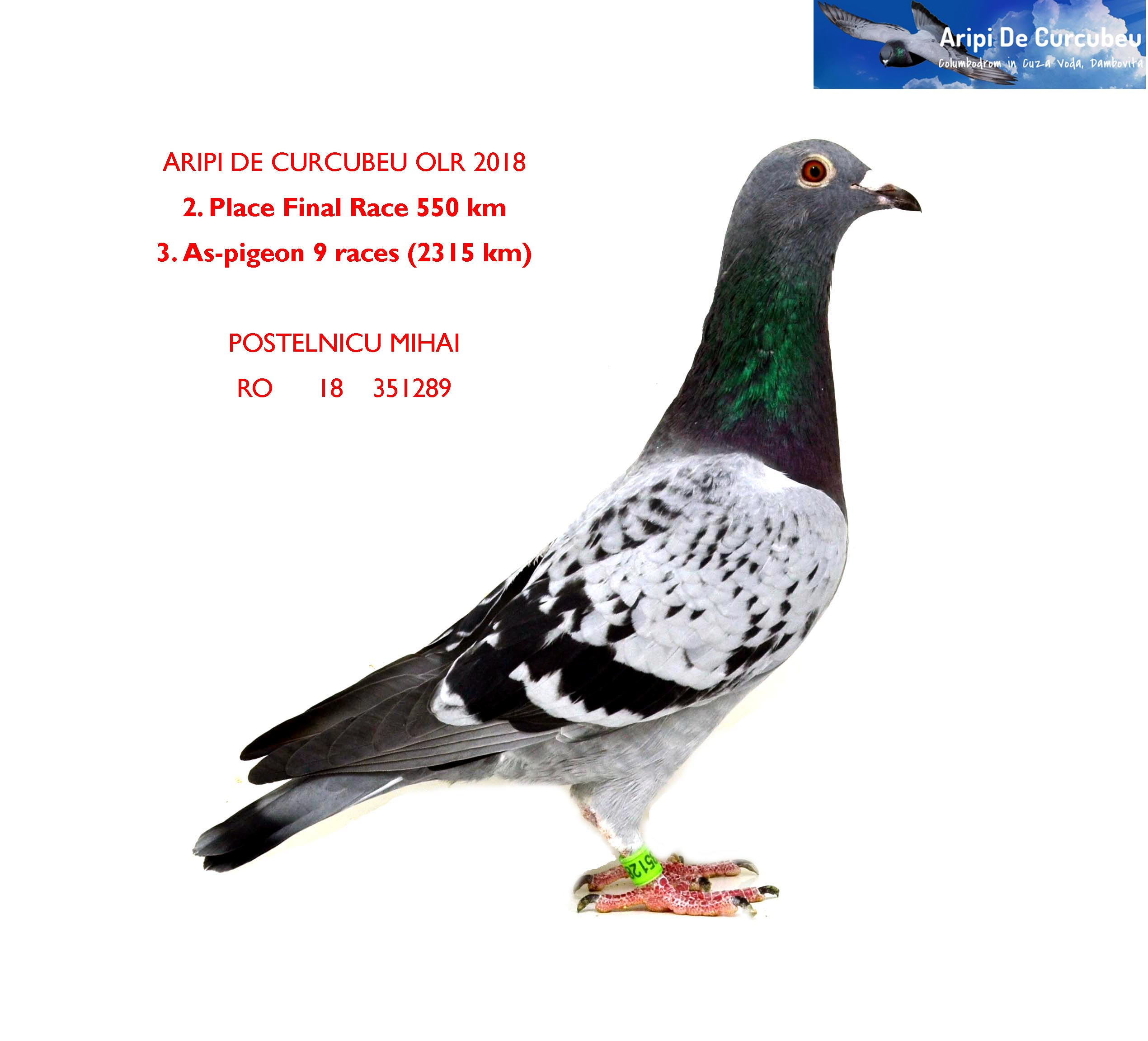 2 FINAL RACE 550km + 3 AS-PIGEON POSTELNICU MIHAI    	RO      18    351289