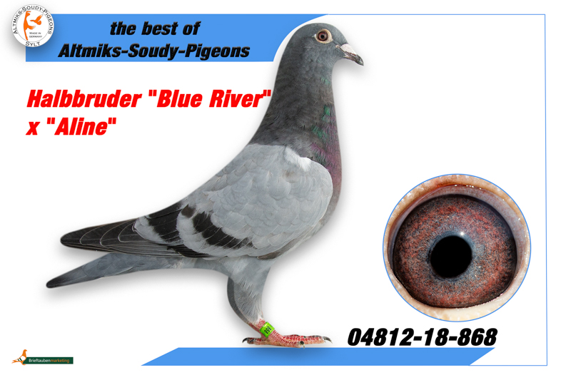 4812-18-868 - Hbrother Blue River x Aline