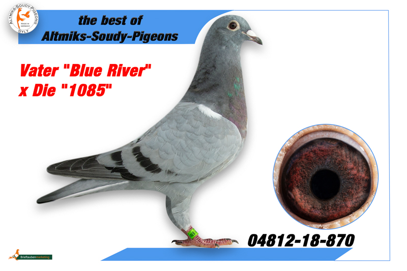 4812-18-870 - Father Blue River x Die 1085