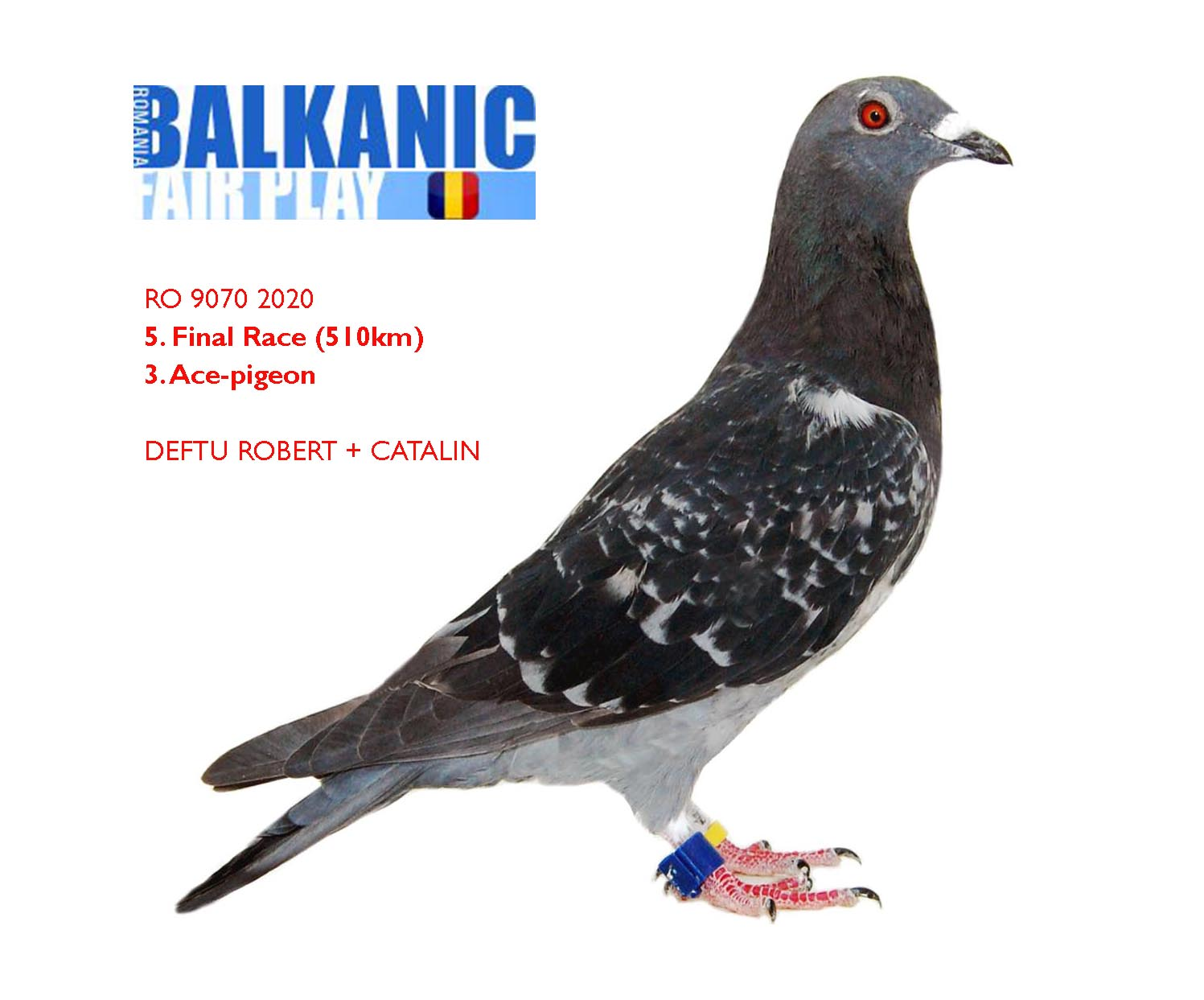 5 FINAL + 3 ACE-PIGEON DEFTU ROBERT + CATALIN	Romania	RO 9070