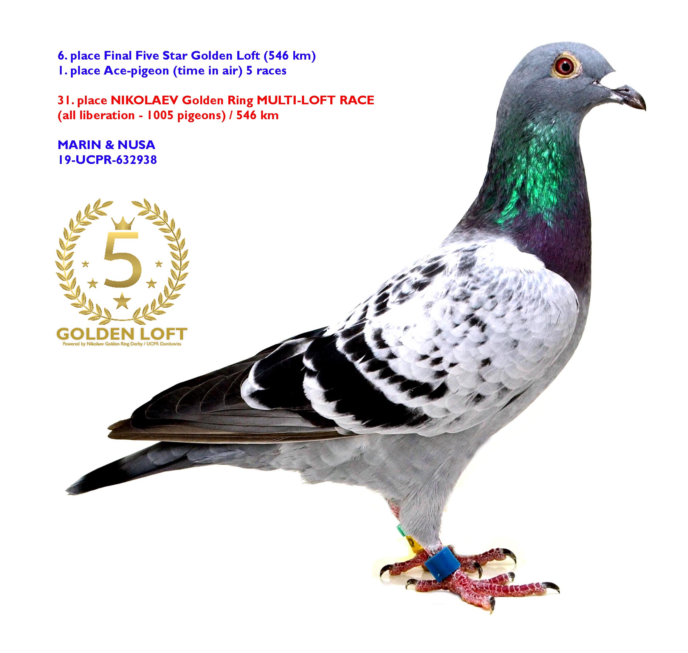 6. FINAL + 1. ACE-PIGEON FIVE STAR GOLDEN LOFT MARIN & NUSA 19-UCPR-632938