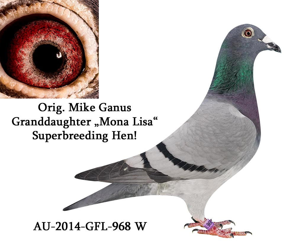 AU GFL 14 968 F - MIKE GANUS - Gdaughter Aviator, Mona Lisa