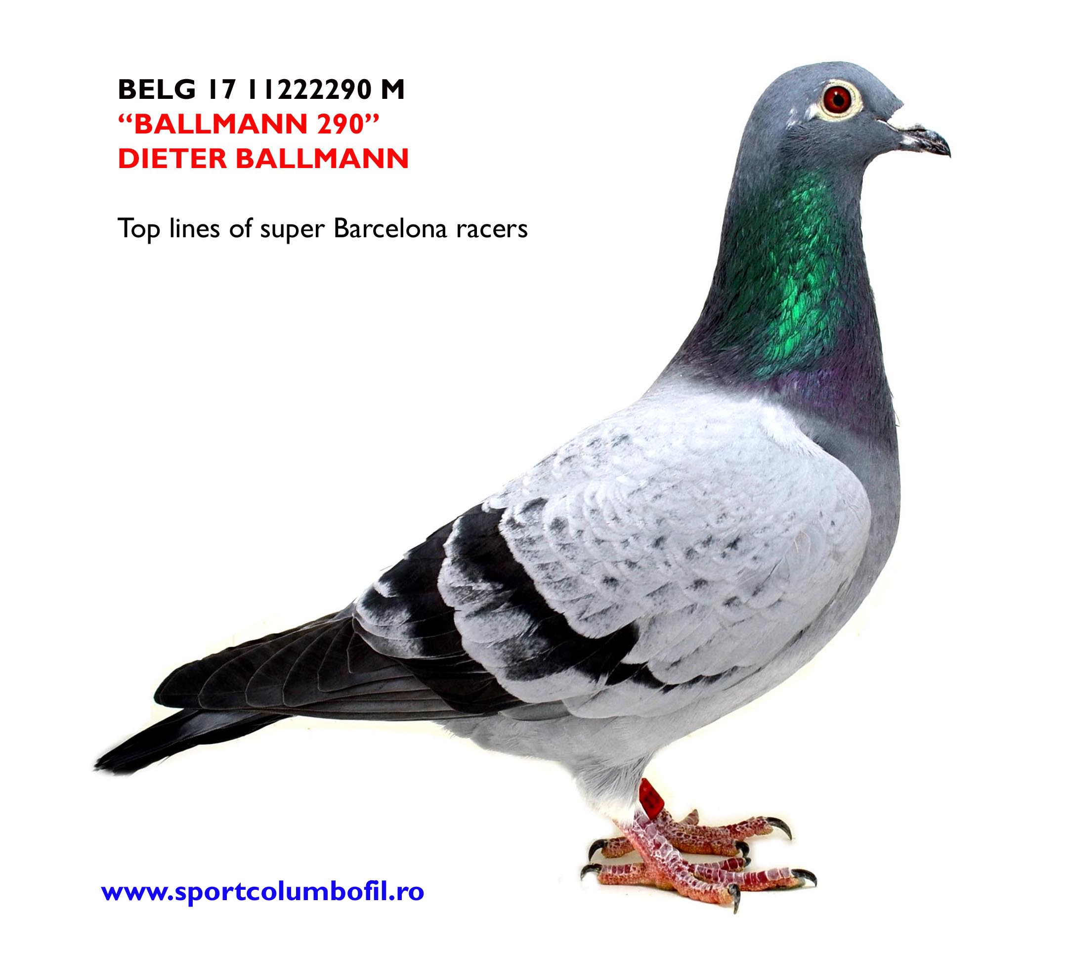 BELG 17 1122290 M - Dieter Ballmann - strong lines of Barcelona winners