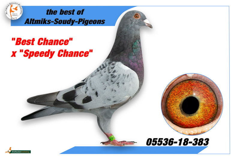 DV 5536 18 383 - Best Chance x Speedy Chance
