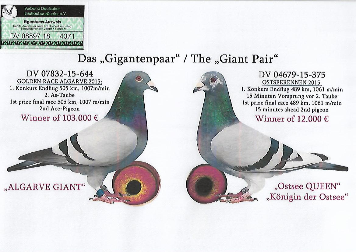 DV8897-18-4371 F - daughter Giant Couple
