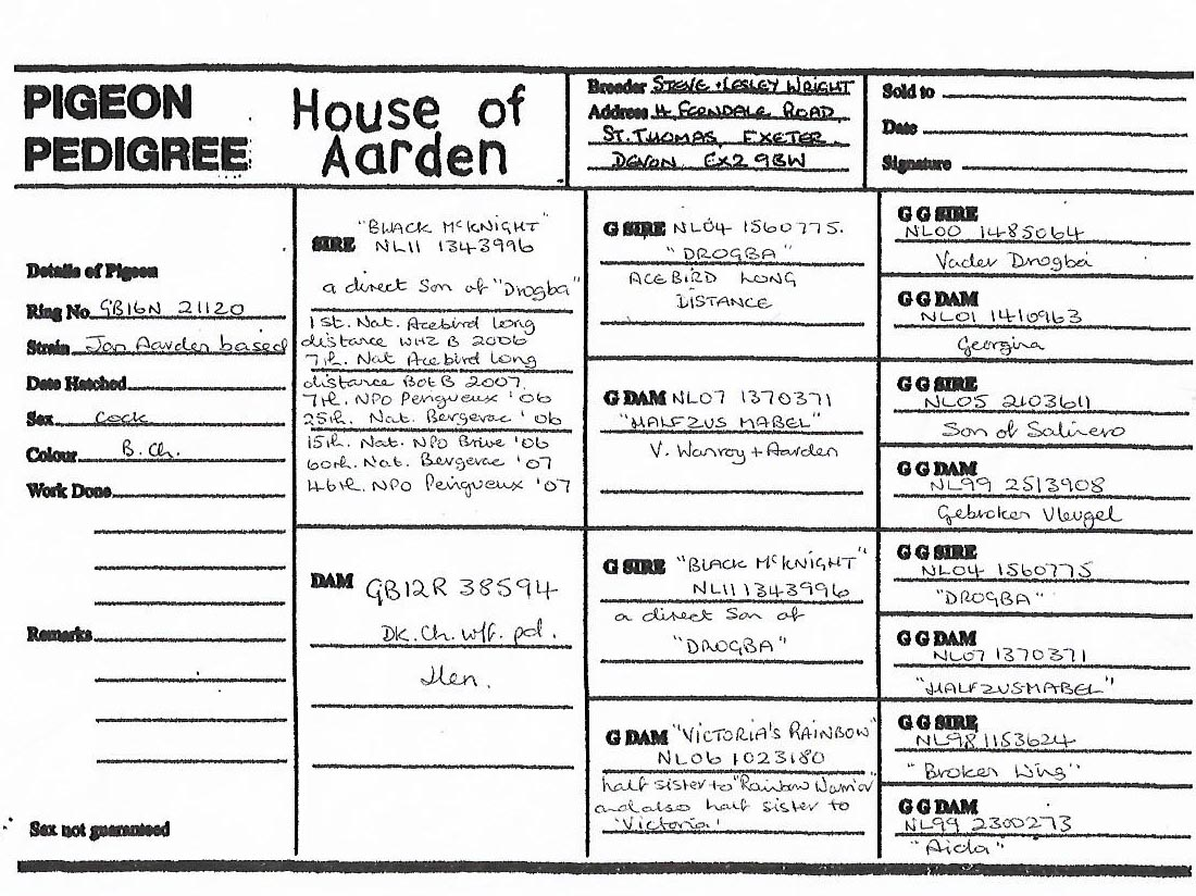 GB 16N 21120 M - House of Aarden - grandson of Drogba Eijerkamp 1 nat WZHB Marathon