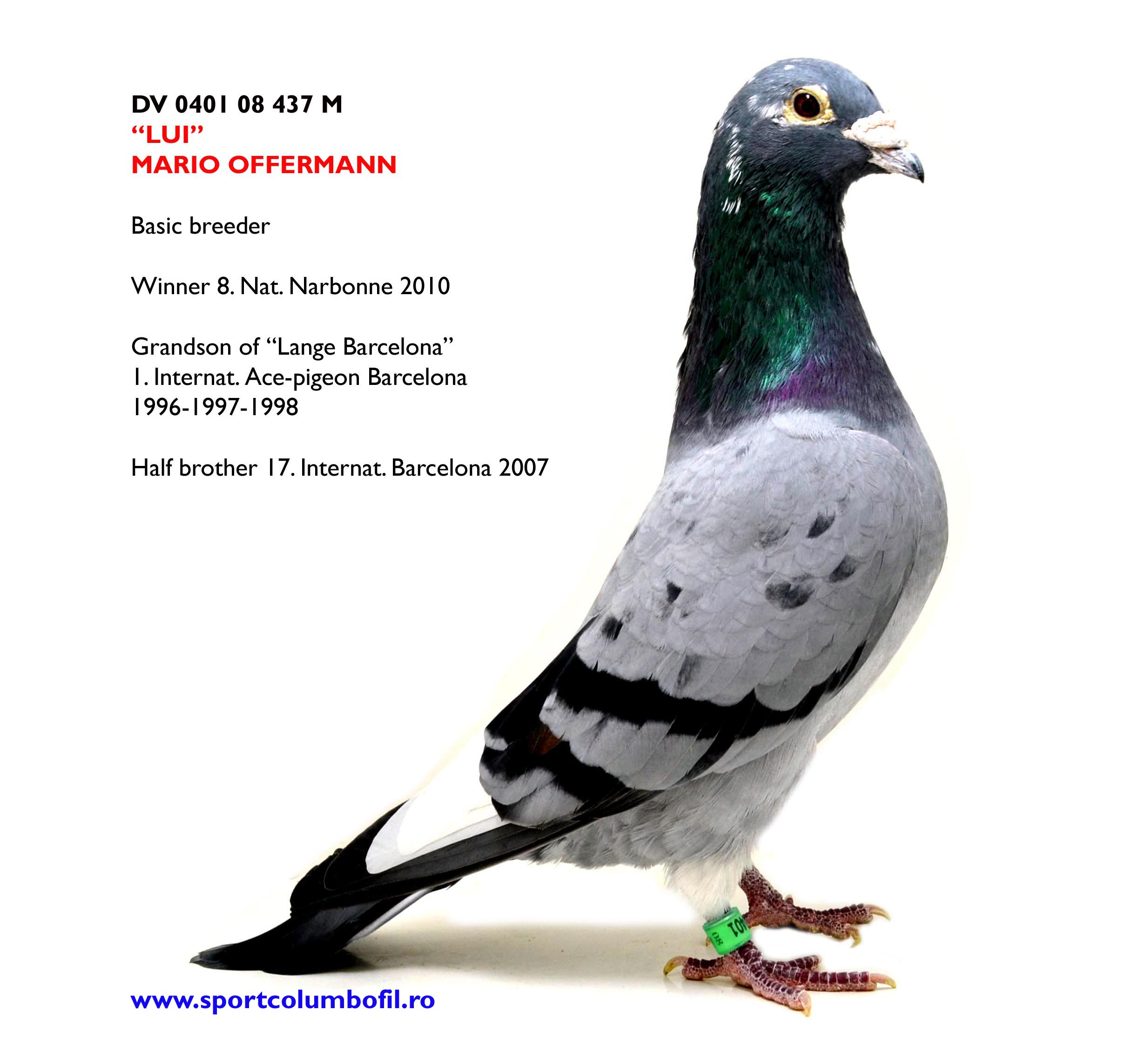 NL 14 1354635 F DIE HEXE - 3 Prov Ace pigeon Great Long Distance Yl; daughter LUI x 150