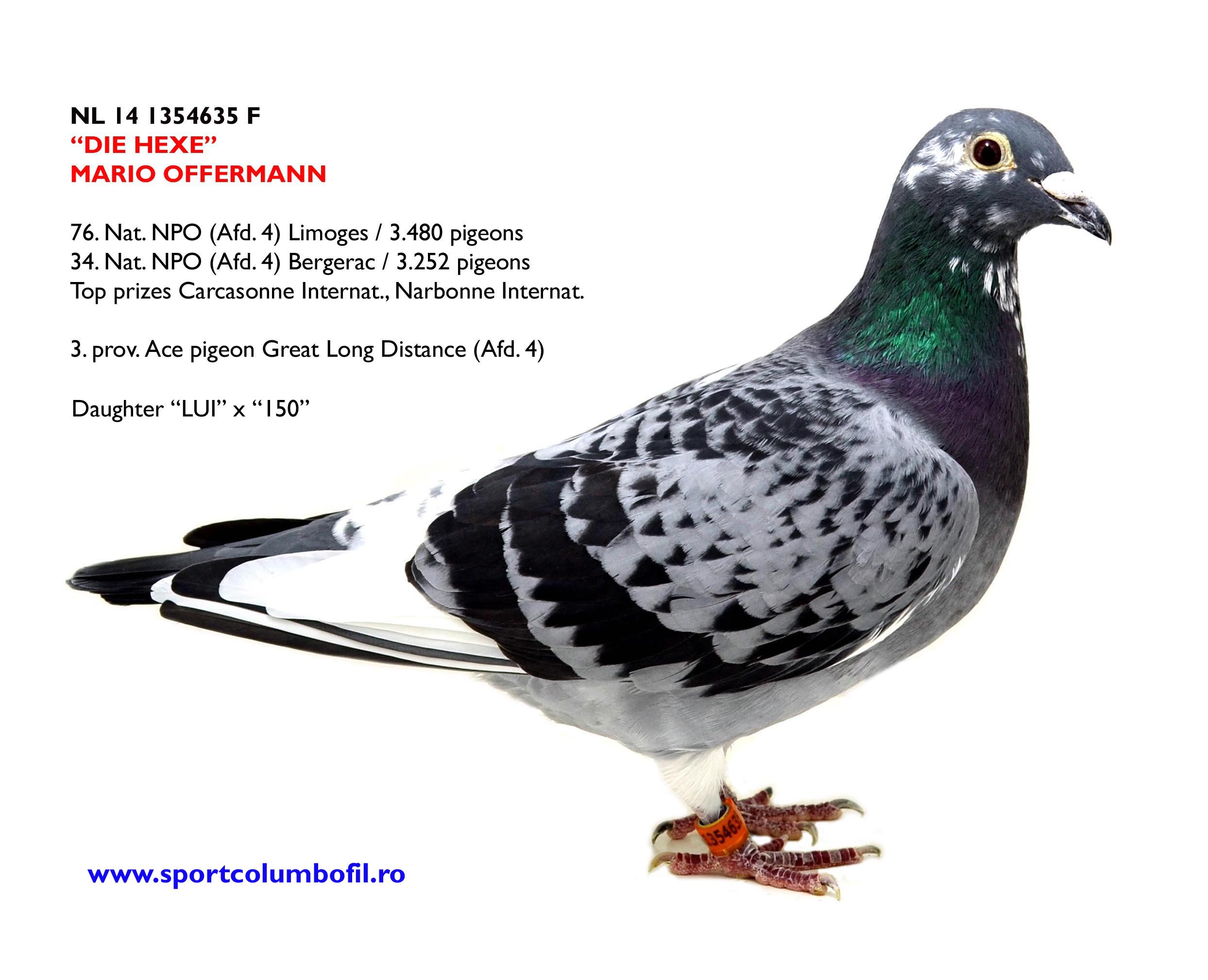 NL 15 1126025 M - 252 Nat Marseille; half brother DIE HEXE 3 prov Ace pigeon