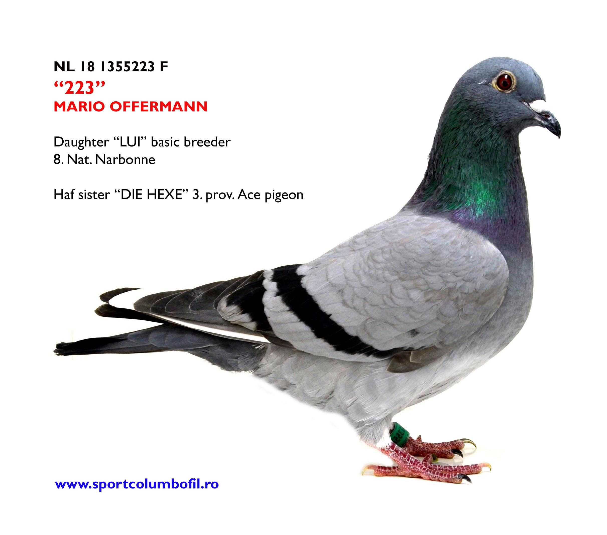 NL 18 1355223 F - Daughetr LUI basic breeder x daughter BIJTER Huub Smeets