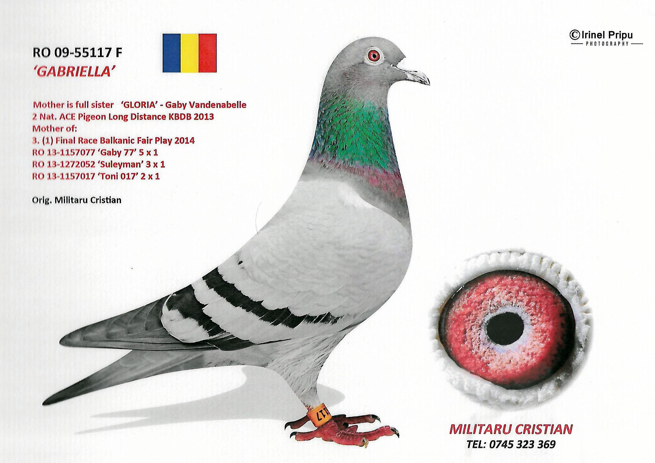RO 15 66974 ROGER - Father 1. prov Ace-pigeon FNCPR Arges Long Distance