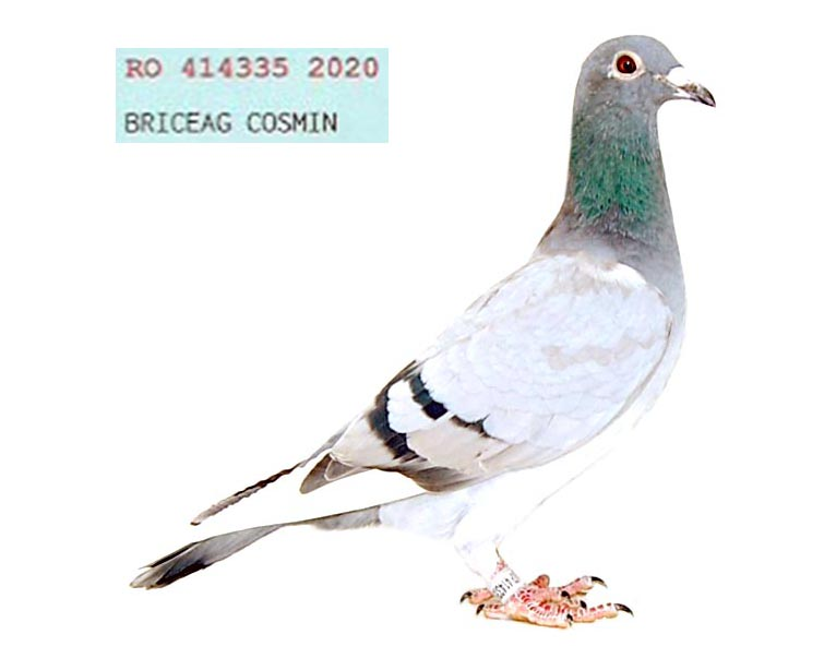 RO 20 414335 M - Son 1 Nat UCPR Middle Distance 2020
